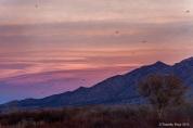 Sunset - Timothy Price