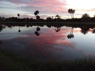 Florida Sunrise - Lynne Dawson