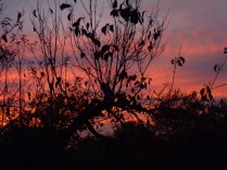 Sunset - Red Sky at Night - Dan Antion
