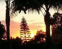 Sunset - San Diego, CA
