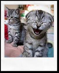 laughkitties