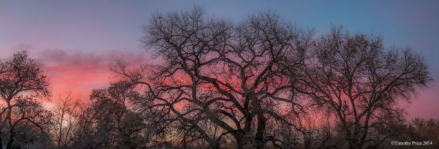 cottonwoodsunset TIMOTHY PRICE