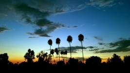 California Palm Trees Sunset